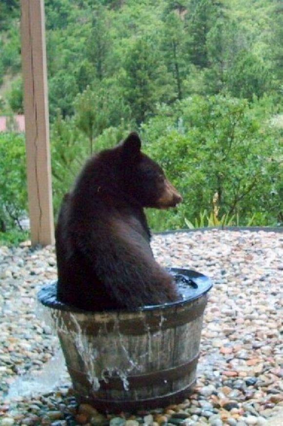Картинки по запросу медведь купается
